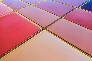 Aerial view of salt pans, pink from pigment of Bacteria (Halobacterium) which thrive in highly saline environments. Salt extracted here is shipped throughout Europe. Santa Pola, Valencian Community, S...  -  Shane Gross