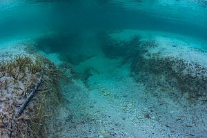 Propeller scar on sea floor, damage to the root structure of Seagrass can lead to erosion of Seagrass bed. Eleuthera, Bahamas.  -  Shane Gross