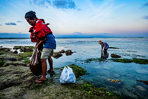 Mother and son searching for Sea urchins (Echinoidea) in Seagrass bed at low tide. Sanur, Bali, Indonesia. 2018.  -  Shane Gross