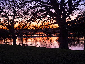 River Avon in flood and Pedunculate oak (Quercus robur) at sunset, Ibsley, near Ringwood, Hampshire, England, UK, January.  -  Mike Read