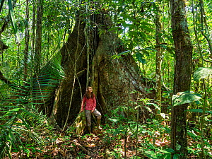 Young woman standing by large rainforest tree with buttress roots, Lowland Rainforest, Panguana Reserve, Huanuco province, Amazon basin, Peru. Model released.  -  Konrad Wothe