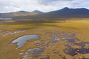 View across the Flow country at Forsinard looking across blanket bog Just south of visitor centre, Northern Scotland, UK.  -  David Tipling