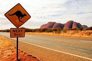 Road sign warning drivers to watch out for kangaroos crossing the road for the next 5km. Uluru / Ayers Rock in distance. Uluru-Kata Tjuta National Park, Northern Territory, Australia.  -  Enrique Lopez-Tapia