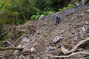 Bunun guide Mr Gao, Yushan National Park, Taiwan, clearing the Walami trail path after a landslide that took out the previous path. Taiwan, March 2019.  -  Staffan Widstrand / Wild Wonders of China