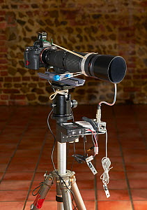 Sony 7r4 camera with Nikkor 200mm micro lens and latest high-speed shutter attached, equipment used by Stephen Dalton 2019.  -  Stephen  Dalton