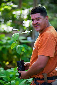 Man holding sapling from tree nursery, portrait. Trees used for tropical rainforest regeneration. Golfito, Costa Rica. 2018.  -  Cyril Ruoso