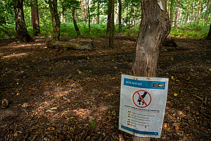 'Picking fungi on this site is not permitted' sign pinned to tree in woodland. Surrey Wildlife Trust Reserve, England, UK. September 2020.  -  Adrian Davies