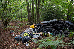 Illegal fly tipping of rubbish including car tyres in woodland nature reserve. Surrey, England, UK. September 2020.  -  Adrian Davies