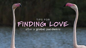 Happy Valentines Day - our gift to you, our 'Top 10 Tips for Finding Love (after a global pandemic)'.  -  NaturePL Showreels