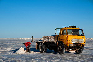 Workman collecting salt for processing, on the Salar de Uyuni, Bolivia. The Salar is the world's largest salt flat, at over 10500 square kilometers. March.  -  John Shaw