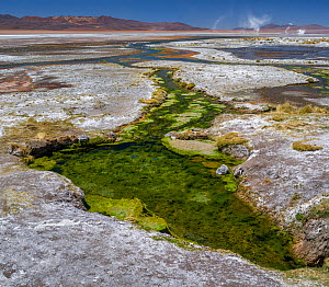 Thermal spring drains into Laguna Salada, in the high altiplano, Bolivia. In the distance, whirlwinds of salt dust rise from the shore. March 2014.  -  John Shaw