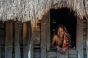 Dani tribe woman looking out of window of house, Budaya village, Suroba, Trikora Mountains, West Papua, Indonesia. March 2018.  -  Pete Oxford
