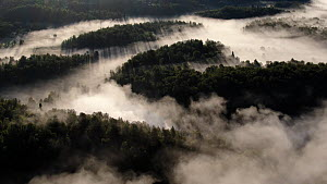 Aerial shot of morning fog rising over the mountain forest, Golsfjellet, Buskerud, Norway, July.  -  Pal Hermansen
