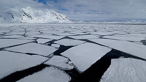 Spring sea ice, large sheets of floating ice off Hornsund, South Spitsbergen National Park, Norway.  -  Pal Hermansen