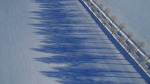 An aerial shot following the long winter shadows of a line of trees in snow, Viken, Norway, January.  -  Pal Hermansen