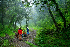 A Nepalese family, flanked by their two Tibetan mastiff dogs, walks along path through the Rhododendron forests at an alttude of 3,000 metres on their way to the village of Ghorepani, during the monso...  -  Oriol  Alamany