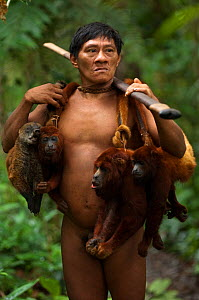 Huaorani Indian, Ontagamo Kaimo, hunting in Amazon rainforest, dead Colombian red howler monkeys (Alouatta seniculus) and South American coati (Nasua nasua) slung over shoulders. Animals shot using bl...  -  Pete Oxford