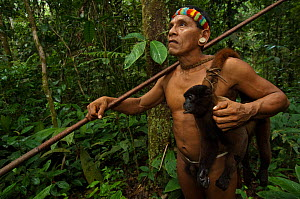Huaorani Indian, Tage Kaiga, hunting in Amazon rainforest, dead Woolly monkey (Lagothrix sp) slung over shoulder, shot using blowgun. Members of this Indian tribe were uncontacted until 1956. Yasuni N...  -  Pete Oxford