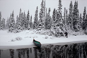 Innu hunter, Pinip, checking traps in snow covered boreal forest, in autumn. Southern Labrador, Newfoundland and Labrador, Canada.  -  Bryan and Cherry Alexander