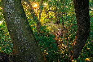 People walk under forest canopy to join Sunday service at the church located within the forest, near Bahir Dar on the shores of Lake Tana, Ethiopia.   Fragments of original Afromontane forest survive...  -  Bruno D'Amicis