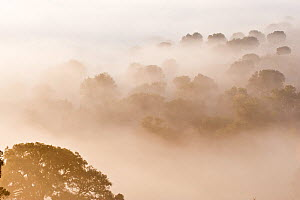 Mediterranean forest at sunrise, on a cold foggy morning in January. Many species of Iberian fauna live here. Monfrague National Park, Spain.  -  Francisco Marquez