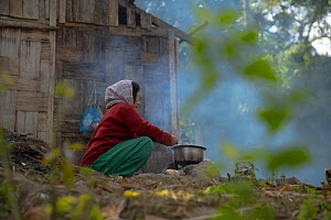 Local elderly woman cooking a meal from her family over open fire (with wood from local forest) Abor hills, Arunachal Pradesh, India, December 2019.  The locals are also known to construct their house...  -  Felis Images