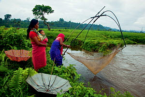 Bodo women fishing in a monsoon stream on the periphery of Nameri National Park, Assam, India.  -  Sandesh  Kadur