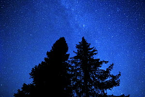 Pine and fir trees at night with the Milky Way and stars in the sky. Bieszczady Mountains, Poland. September.  -  Mateusz Piesiak