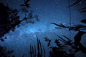Plants and trees at night with the Milky Way and stars in the sky. Bieszczady Mountains, Poland. September.  -  Mateusz Piesiak