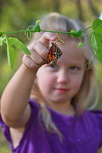 Gulf fritillary butterfly (Agraulis vanillae) on Passion vine (Passiflora sp), girl attempting to hold the butterfly by moving it on to her finger. Hill Country, Texas, USA. 2013. Model released.  -  Rolf Nussbaumer