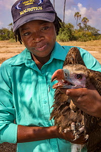 A young White-headed vulture (Trigonoceps occipitalis) is gently restrained by young Mozambican scientist Diolinda Mundoza, as biologists prepare to release it after attaching a solar-powered GPS tran...  -  Jen Guyton