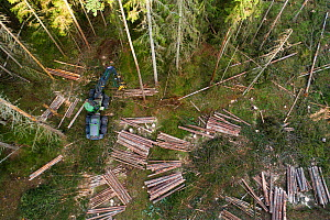 Logging operations with harvester and log piles in Spruce forest, aerial view. Akershus, Viken, Norway. August 2019.  -  Pal Hermansen