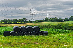 Plastic covered bales stacked on farmland, Cheshire, UK, July 2020  -  Alan Williams