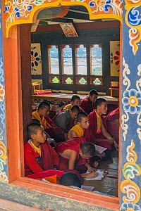 Young Buddhist monks in class. Chime Lhakhang Temple (The 'fertility temple'). Bhutan. September 2013.  -  Jeff Foott