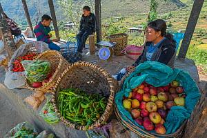Thimphu Market with woman selling peppers and apples, Bhutan. September 2013.  -  Jeff Foott