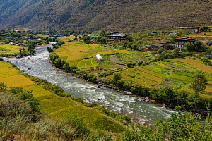 Farmland beside river and houses in Thimphu River Valley. Bhutan. September 2013.  -  Jeff Foott