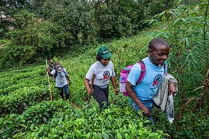 Conservation Through Public Health (CTPH) founder Dr. Gladys Kalema-Zikusoka with visitors and rangers, climbs into the hills of Bwindi Impenetrable National Park to check on the health of gorillas an...  -  Jo-Anne McArthur / We Animals