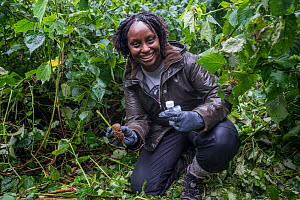 Conservation Through Public Health (CTPH) founder Dr. Gladys Kalema- Zikusoka collects gorilla faeces from their night beds, which will be analysed in her lab to monitor the health of the troop. Ugand...  -  Jo-Anne McArthur / We Animals