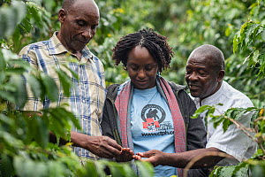 Dr. Gladys Kalema- Zikusoka of Community Through Public Health, looking at coffee plants. This organisation partners with coffee plantation owners to create Gorilla Conservation Coffee, which aims to...  -  Jo-Anne McArthur / We Animals