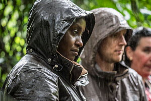 Dr. Gladys Kalema- Zikusoka and visitors observe a troop of gorillas in the pouring rain in Bwindi Impenetrable National Park. Uganda April 2016.  -  Jo-Anne McArthur / We Animals