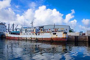 A Chinese commercial fishing boat at the dock in front of a tuna processing plant, Colonia, Yap, Micronesia.  -  David Fleetham