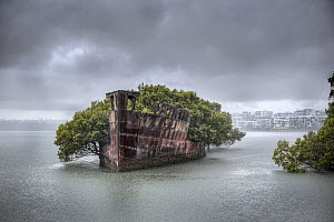 The rusted hull of an old steamship, the SS Ayrfield.  Wentworth Point, Homebush, NSW, Australia. October 2014  -  Doug Gimesy