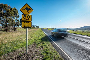 Speed sign on a country road advising drivers to slow down from the standard 100kmh to 80kmh between dusk and dawn due to the risk of hitting kangaroos. Car driving past.  Toolern Vale, Victoria, Aust...  -  Doug Gimesy