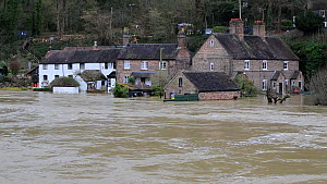Houses flooded by the River Severn after Storm Ciara and Storm Dennis, the wettest February recorded in the UK. Shrewsbury, Shropshire, England, UK, February 2020.  -  Ashley Cooper