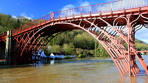 Ironbridge, the world's first cast iron bridge. The River Severn in flood conditions following Storm Ciara and Storm Dennis, the wettest February recorded in the UK. Shropshire, England, UK, February...  -  Ashley Cooper
