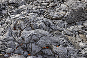 Field of solidified lava, with flowing lava underneath, at the Fagradalsfjall volcano, Iceland. 4 April 2021.  -  Theo  Bosboom