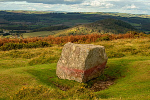 The Whetstone on Hergest Ridge, a glacial erratic boulder, composed of gabbro, Herefordshire, England, UK. October.  -  Will Watson