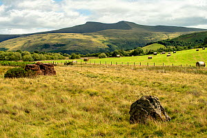 Pen Y Fan from Mynydd Iltud Common with prehistoric standing stone in the foreground, Brecon Beacons National Park, Wales, UK. July. Focus stacked.  -  Will Watson