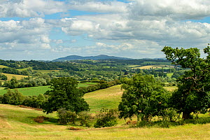 Malvern Hills SSSI and AONB viewed from Bromyard on the Herefordshire Plateau, England, UK. July.  -  Will Watson
