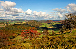 Hergest Ridge looking towards Stanner Rocks National Nature Reserve, midframe and Herrock Hill, Wales/England border, Welsh Marches, October.  -  Will Watson